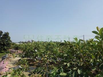 燕巢優質農地