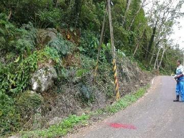 新竹北埔漂亮林地
