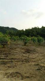 燕巢崎留瀑布增值農地