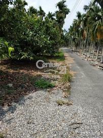 (625)屏東內埔農地