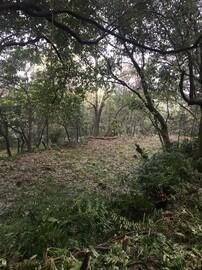 姜子寮1911坪農林牧用地臨步道與水源