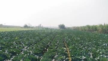 善化開心農場