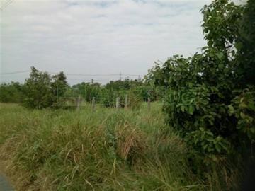阿蓮土庫雙面路農地