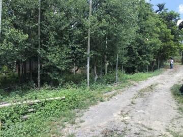 埔里市區牛樟樹投資地